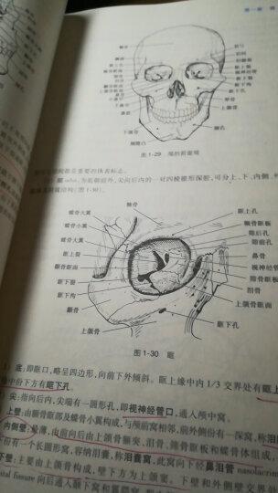 系统解剖学(第8版) 晒单图