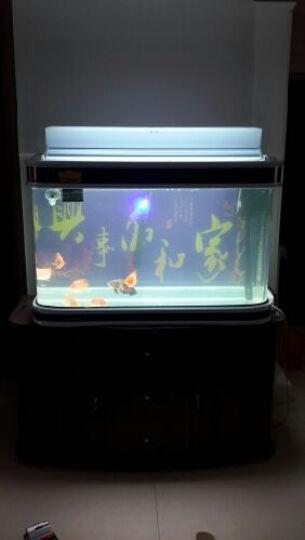鱼缸加热棒恒温棒自动感应水族箱发热器防爆数码显示智能电子感温系统控制 H-300W 带LED温显双温调离水断电 晒单图