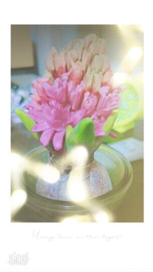 买【三送一 五送二】荷兰进口风信子种球 玻璃瓶水培套装 办公室内桌面花卉绿植 盆栽 B1香槟酒玻璃瓶套装 晒单图