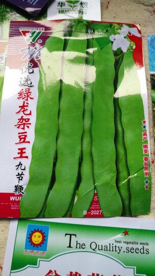 颜集卉 D蔬菜瓜果种子 家庭园艺庭院 绿龙架豆王 50粒 晒单图