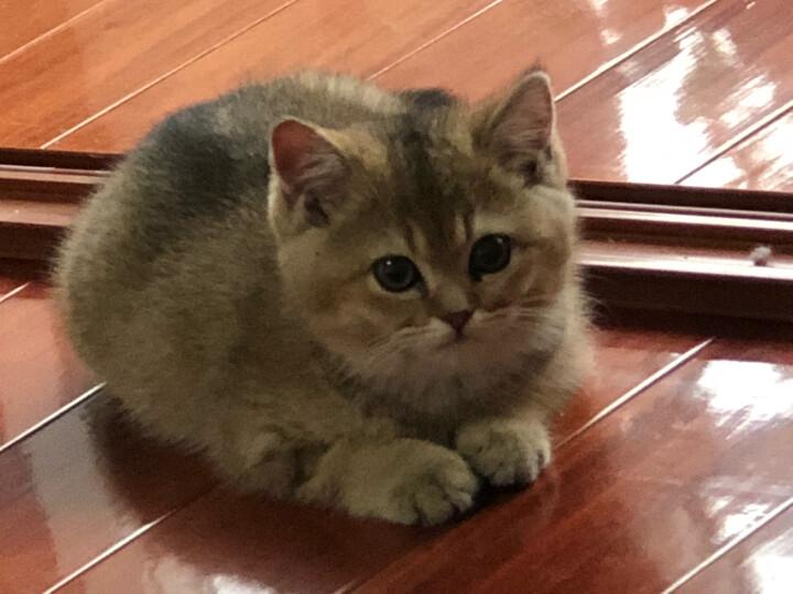 憨憨乐园 宠物包猫咪背包泰迪外出狗狗包包猫猫包猫便携笼袋子箱用品S号37*17*24cm 晒单图