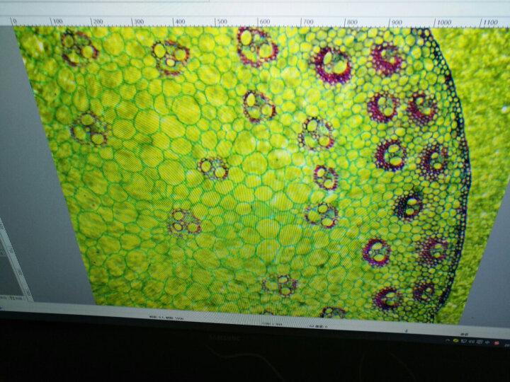 贝朗BM-500双目/三目生物显微镜 专业光学2500倍高清 可接电脑 科研实验教学显微镜 3:三目版+手机夹(接手机拍照录像) 晒单图