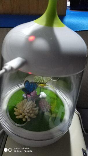 奥其斯(OUTRACE)LED 微景观植物灯 儿童小夜灯睡眠灯DIY盆栽触碰感应夜灯定时关机 实用创意礼品 蝴蝶款 晒单图