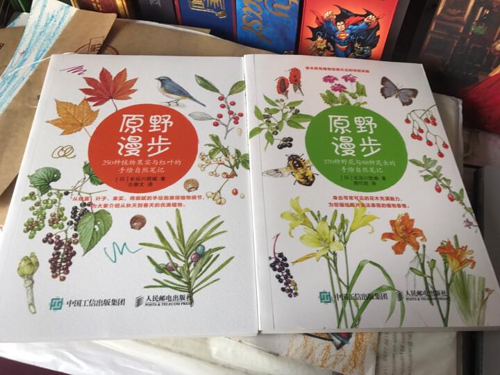 原野漫步 250种植物果实与红叶的手绘自然笔记 晒单图