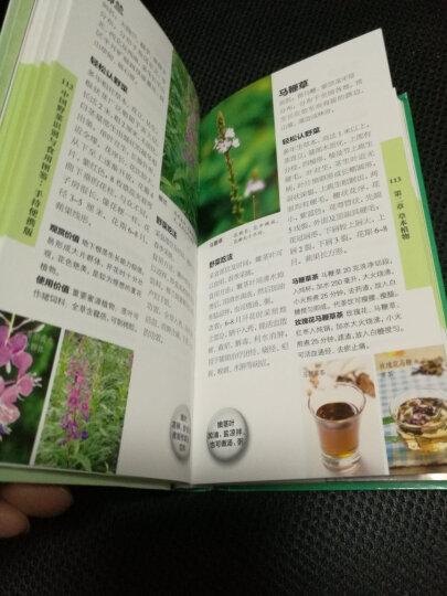 中国野菜识别与食用图鉴:手持便携版(汉竹) 晒单图