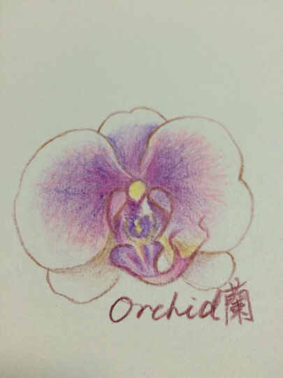 色铅笔的花草生活 晒单图