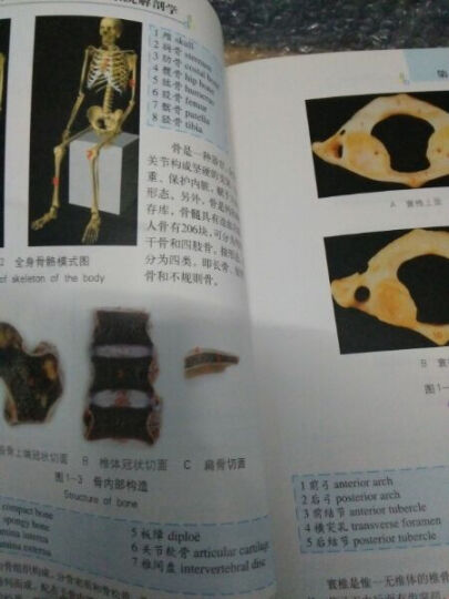 实用人体系统解剖学标本图谱 晒单图