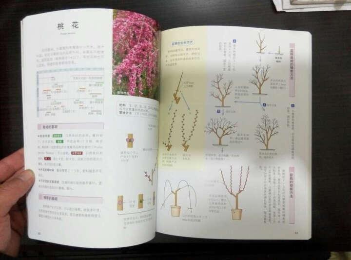 庭院花木修剪:花木盛开的法宝 晒单图