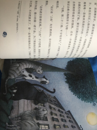 塞普尔维达童话:教海鸥飞翔的猫 晒单图