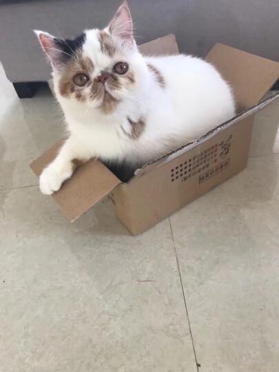 宠幸猫砂  绿茶松木猫砂5L约2.82KG 猫沙宠物猫用品除臭猫砂 晒单图