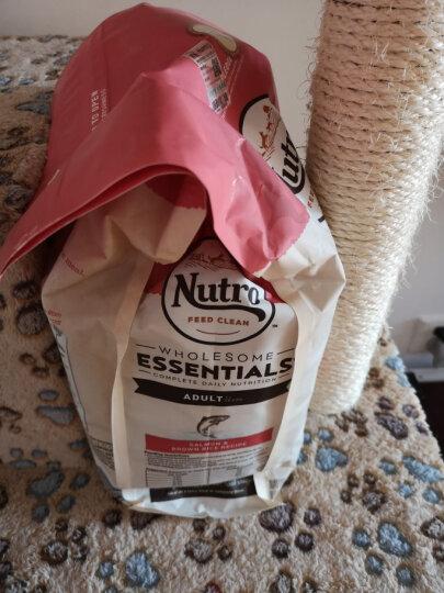 NutroChoice 美士宠物成猫粮鲑鱼+糙米+鸡肉6.5磅2.95kg 6.5磅/2.95公斤 晒单图