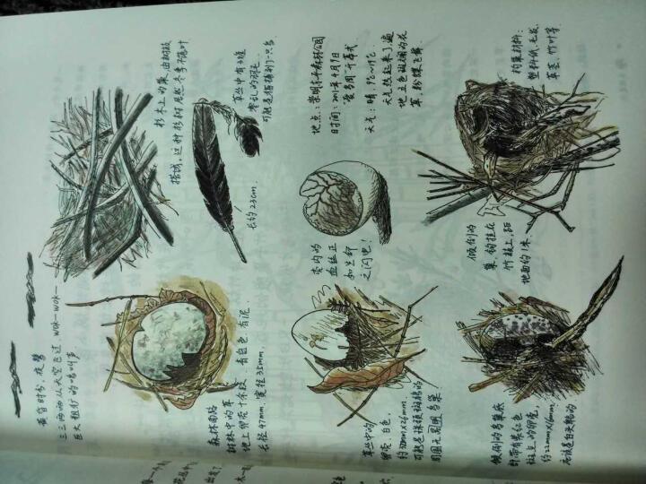 自然笔记 晒单图