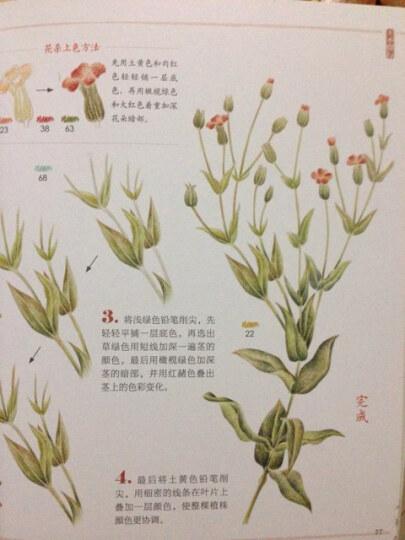 本草绘:38种药用植物的色铅笔图绘 晒单图