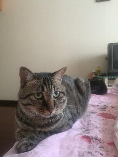 耐威克 猫粮 理想体态猫粮 成猫 夹心喵酥450G 晒单图