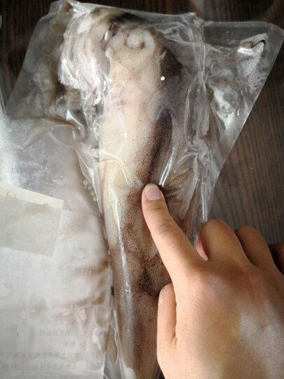 丰度 青岛小鱿鱼 400g 盒装 笔管鱼海兔海鲜  晒单图