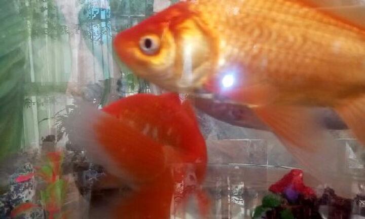 金利佳(Jeneca)鱼缸水族箱小型玻璃桌面迷你小鱼缸生态创意造景中型金鱼缸长方形 TG-23白色大缸【标配+造景】 晒单图