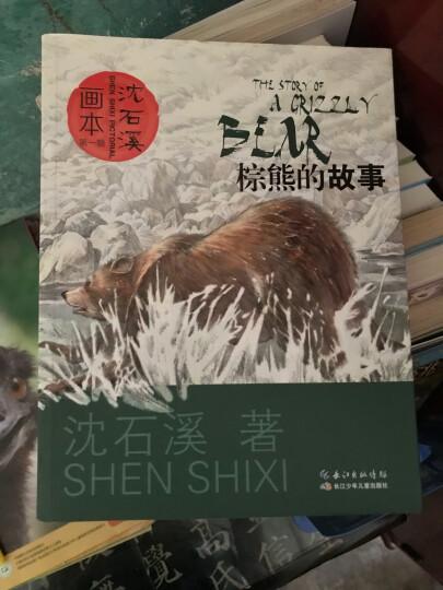 沈石溪画本 第一辑·棕熊的故事 晒单图
