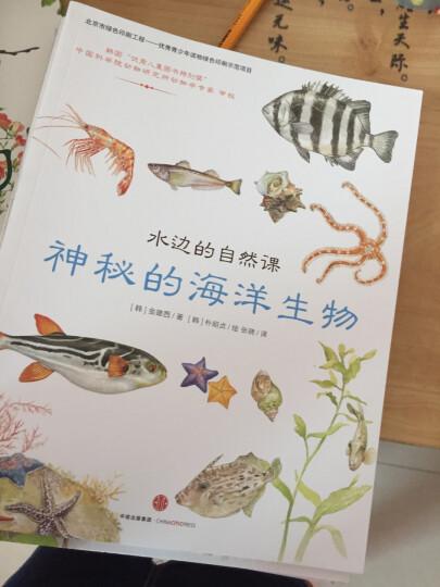 水边的自然课 多样的溪边生物 晒单图