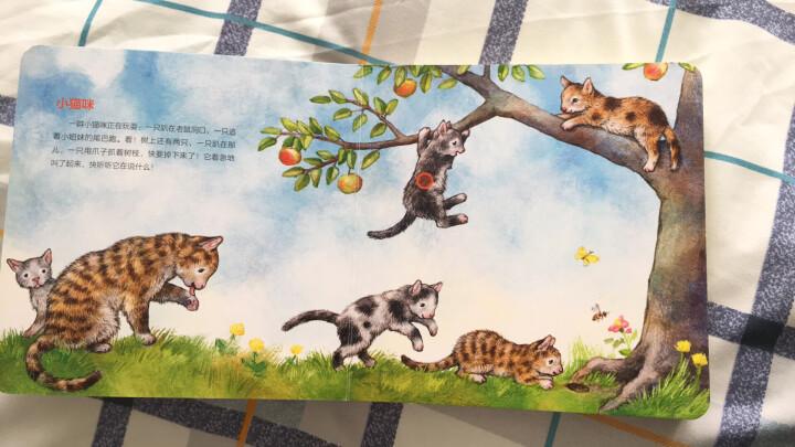 德国高端定制·认知启蒙发声绘本 动物宝宝 6种动物真实声音 晒单图