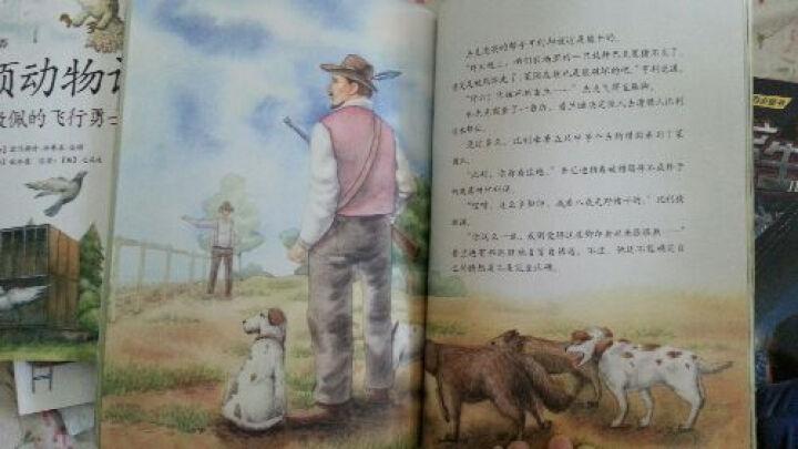 西顿动物记9:勇敢的爸爸 晒单图