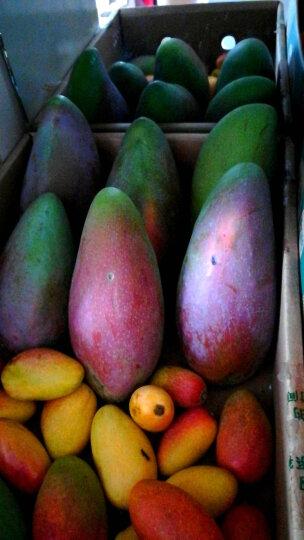 【三亚馆】海南现摘大青芒 单果500g以上 大芒果4.5kg/9斤新鲜水果 晒单图