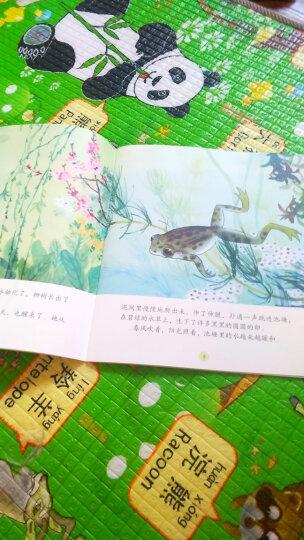 中国名家经典原创图画书乐读本马得系列:三打白骨精+牛郎织女+东郭先生+大宝和小宝(套装共4册) 晒单图