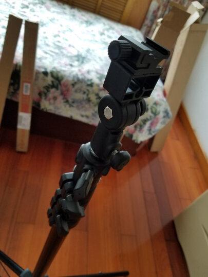 金贝250W摄影灯影室闪光灯柔光箱补光灯摄影棚套装 电商服装静物产品人像拍照灯影棚器材双灯拍摄 晒单图