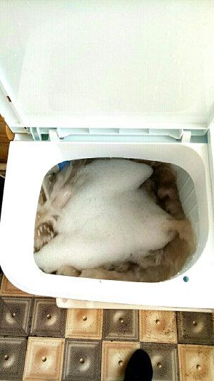新飞(Frestec) 6 7 8 9公斤半自动双缸双桶大容量波轮家用带甩干洗衣机大家电 XPB82-X8006S 8.2公斤 晒单图