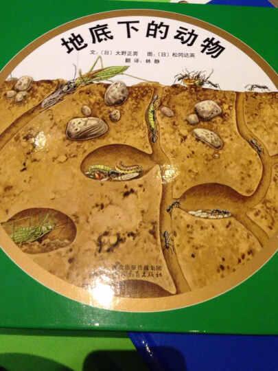启发精选世界优秀畅销绘本:海边的动物+地底下的动物(套装全2册) 晒单图