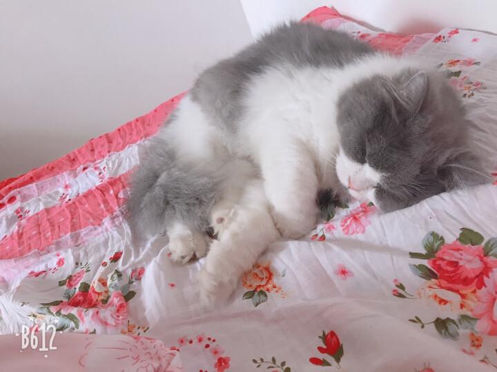 咕咚咕咚四件套纯棉磨毛床上用品韩式全棉床单被罩被套单人双人四件套 瑰庄园紫-磨毛 1.8m床 晒单图