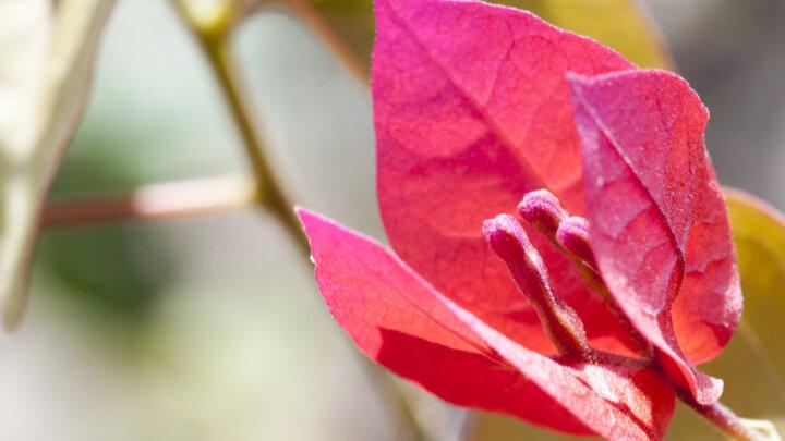 腾龙AF 90mm F/2.8 MACRO1:1百微花卉花草鸟昆虫微距镜头272E口腔 人像90微 佳能口+UV镜+清洁套 晒单图