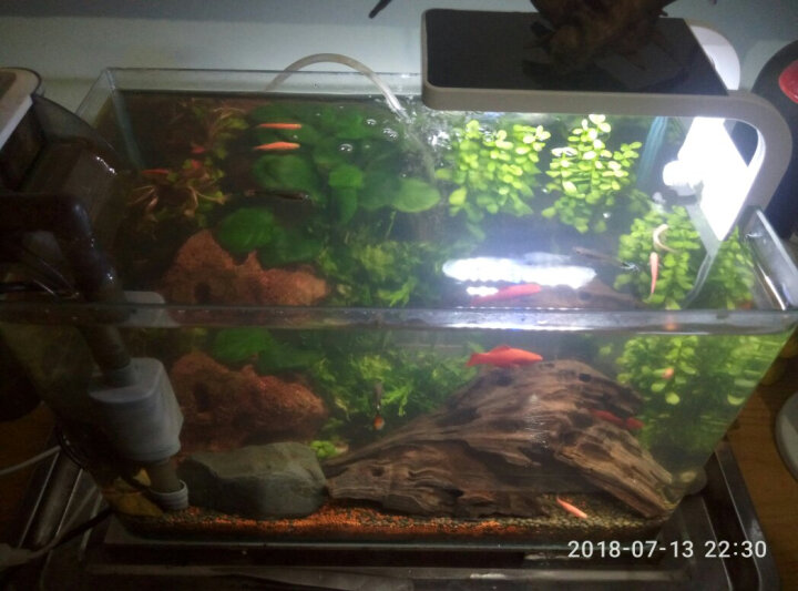 云峰海瑞 水草活体鱼缸造景套餐用品水榕水族箱装饰鱼缸种子沉木 红玫瑰沉木单头 晒单图