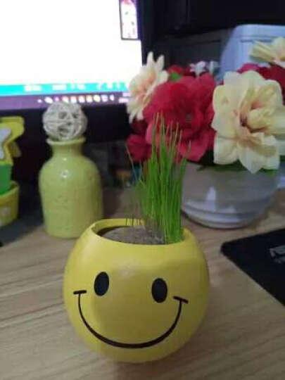 绿色盆栽办公室迷你植物青草种植QQ表情草头娃娃桌面负离子生态瓶小盆栽 X心形草 晒单图