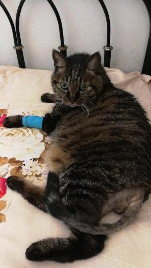 ROYAL CANIN 皇家猫粮 H33美毛呵护成猫猫粮 全价粮 2kg 健康皮肤 被毛亮泽 晒单图