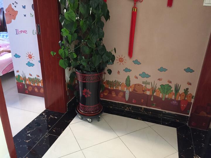视觉空间 墙角踢脚线腰线墙贴纸贴画卧室客厅玻璃装饰品幼儿园儿童房墙纸自粘 卡通向日葵 晒单图