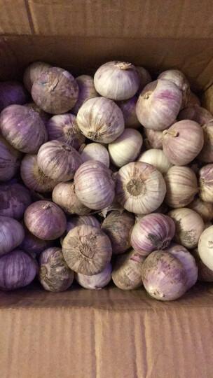 秋色大地 云南特产紫皮大蒜独头蒜 总重1000g装 晒单图