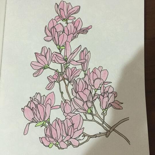 秘密后花园1+2 全2册 赠送12色彩色铅笔一盒 把这个世界涂成你想象的样子 晒单图
