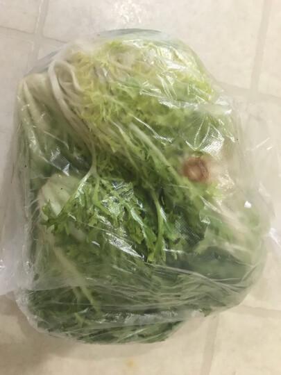 老一生鲜 新鲜 苦菊 苦叶 苦苣 苦菜 生菜 沙拉菜 500克 晒单图