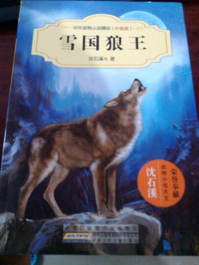 雪国狼王 幼儿图书 早教书 故事书 儿童书籍 晒单图