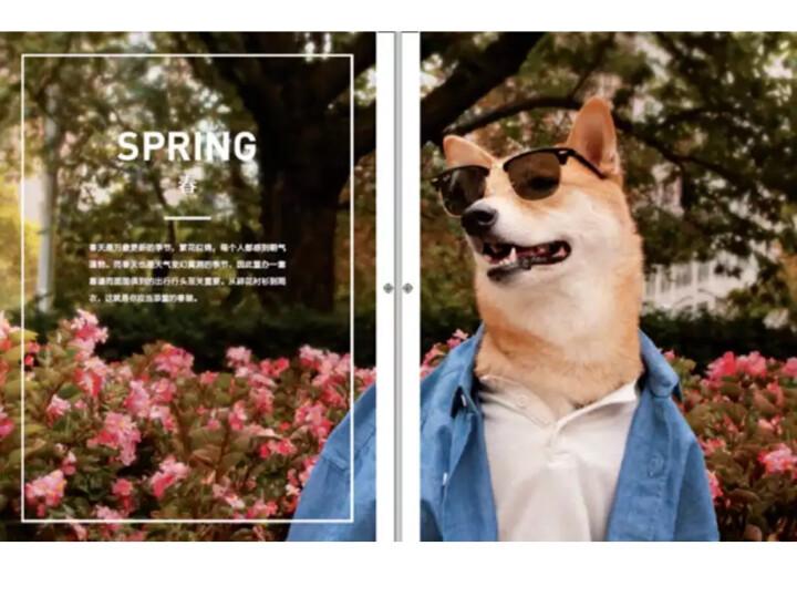 柴犬绅士:都市型男好品位穿搭指南 晒单图