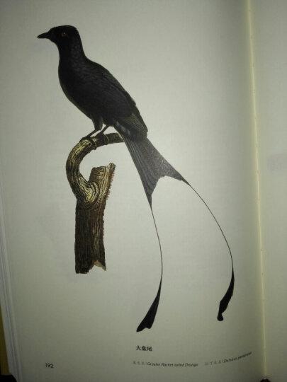 世界鸟类图谱 亚洲鸟类 晒单图