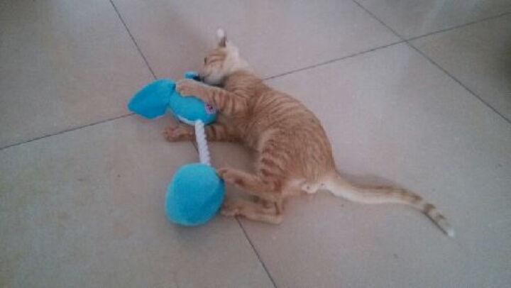 憨憨乐园 宠物毛绒玩具宠物玩具训导玩具狗玩具猫玩具直线咬绳颜色随机 愤怒的小鸟发声玩具 晒单图