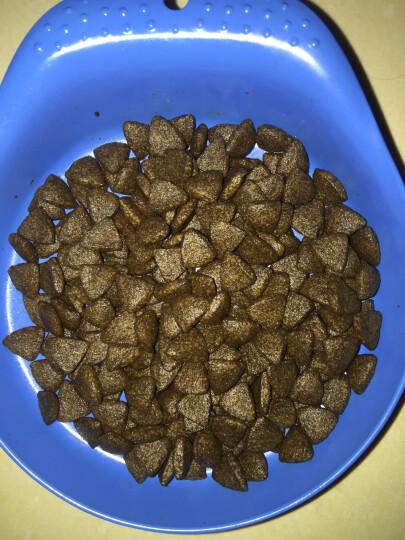 英国海洋之星沙丁鱼猫粮无谷粮成幼猫美毛 1.5kg 晒单图