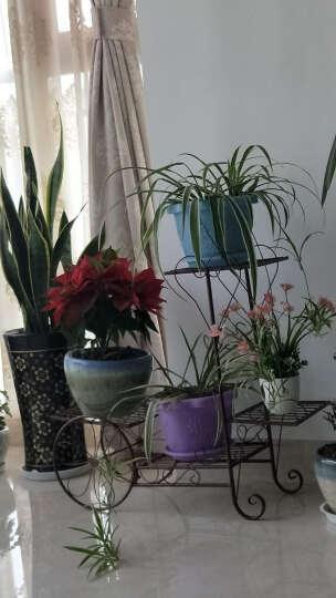 有嘉铁艺花架客厅阳台落地室内绿萝吊兰花盆架自行车多层花架子植物架 小号=古铜 晒单图