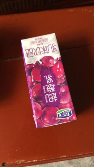 君乐宝 超酸乳 葡萄味乳味饮料250ml*12盒/礼盒装 晒单图
