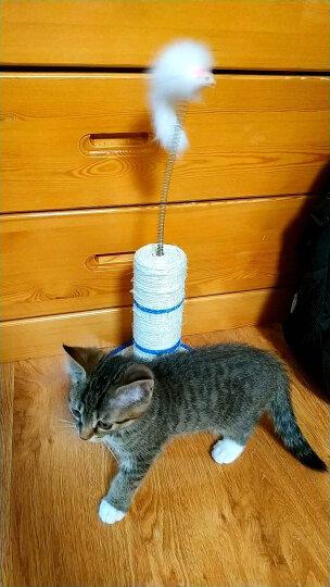 爱咪购AIMIGOU猫抓板 猫玩具 剑麻片 猫用品 老鼠形状剑麻板 晒单图