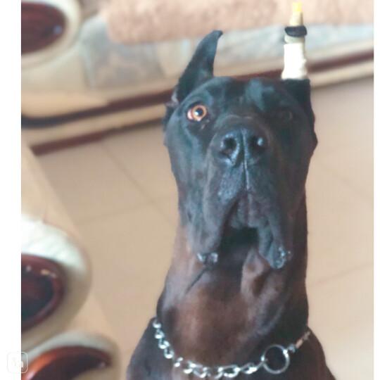 伯纳天纯Pure&Natural宠物狗粮中大型犬成年犬狗粮健胃促吸收15kg 晒单图