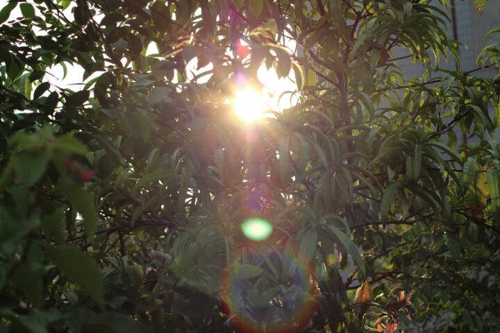 腾龙(Tamron)AF70-300mm F/4-5.6 Di LD MACRO 1:2 [A17] 全画幅远摄变焦镜头 70300 单反微距(佳能卡口) 晒单图