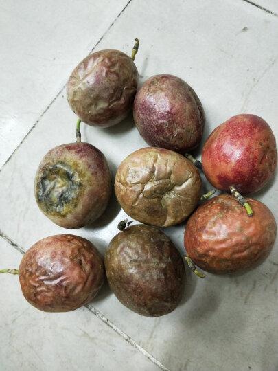 【百色馆】广西百香果 西番莲 鸡蛋果 单果50-80g 新鲜水果 12个装 晒单图