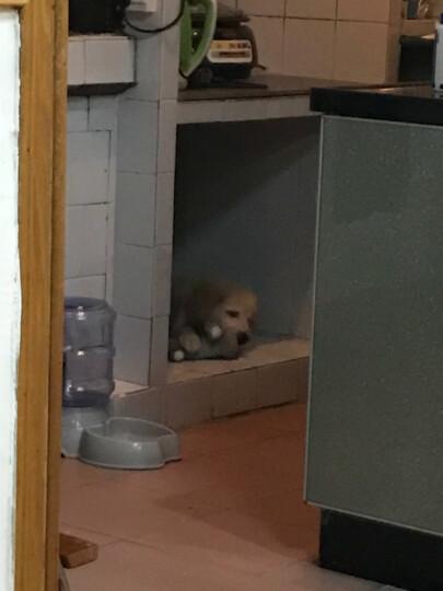 佩迪熊(Petenjoy)宠物狗狗玩具 猫咪狗磨牙洁齿耐咬 金毛泰迪小型犬幼犬毛绒发声训狗用品 棒棒家族-小狮子 晒单图